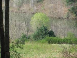 Lovell Creek 1