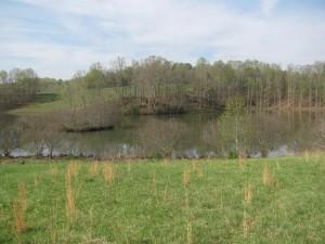 Lovell Creek 6